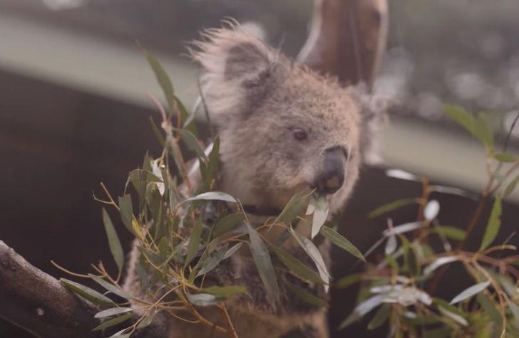 Captura de Pantalla 2020 01 21 a las 11.32.16 - Na Austrália, animais celebram uma trégua nos incêndios com muita chuva: emocionante